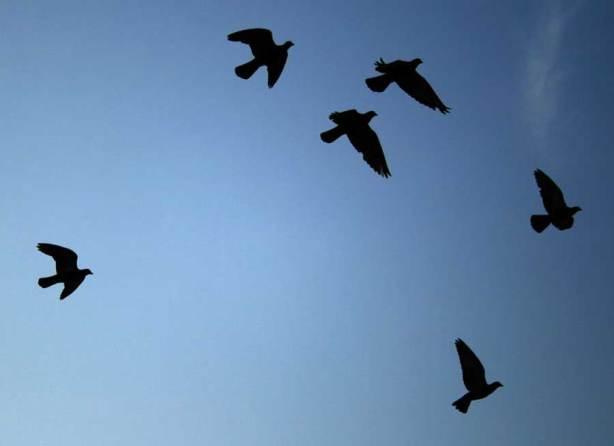 bird_silhouettes-by-Ildar-Sagdejev1